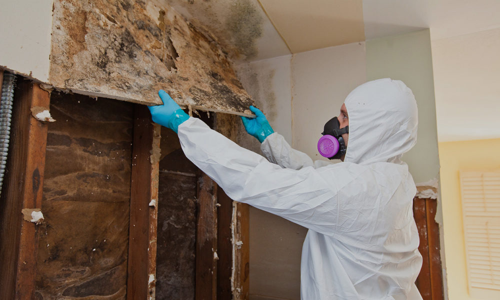 Mold Restoration, Mold Removal, Mold Inspection, Mold Remediation in Miami, Broward, Palm Beach